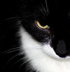 medium_feline.jpg